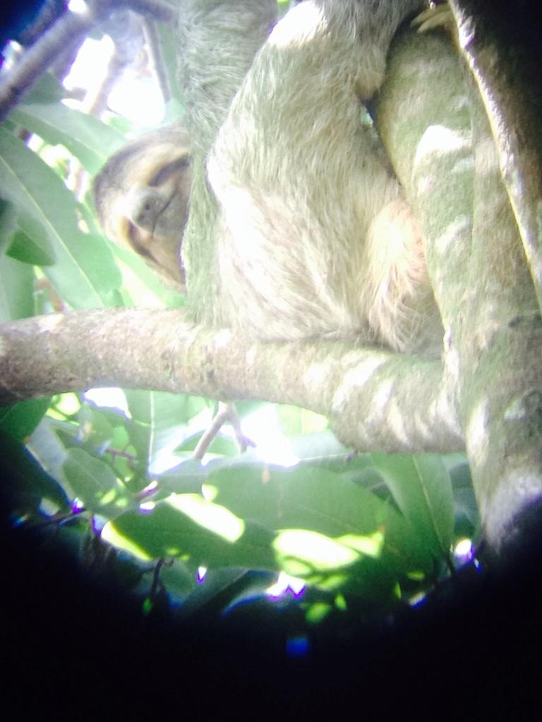 Harrrro Mr Sloth