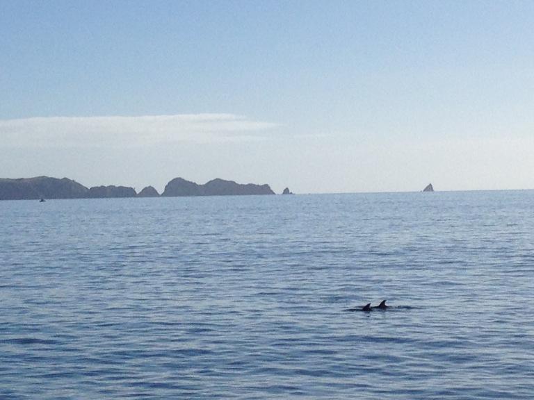 Definitely dolphins :)